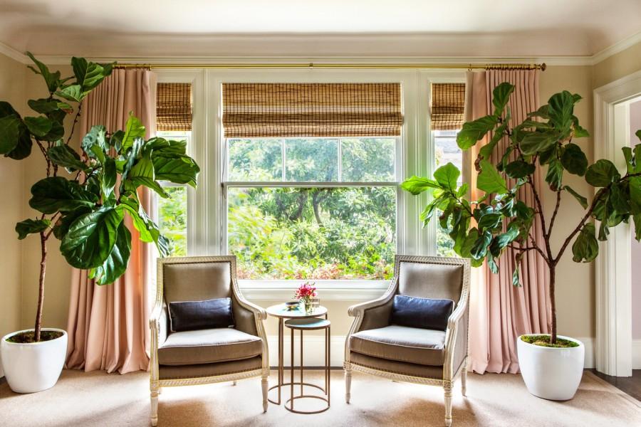 fotolii-clasice-in-decorul-unui-living-cu-plante